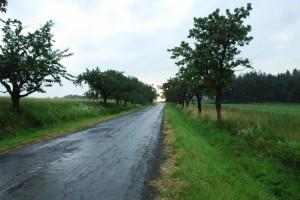 Czereśniowa droga...