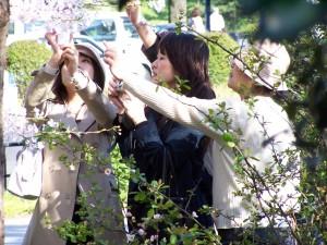 Fotografowanie kwitnących drzew wiśni jest kawaii z pewnością... Tokio, okolice pałacu cesarskiego