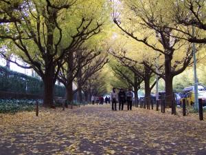 Opadanie liści jest kawaii... Tokio