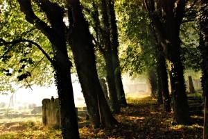 Trees. Krnov Jewish Cementary