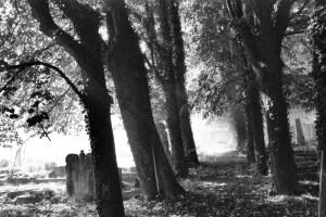 Żydowski cmentarz wKarniowie. Impresja (2014)