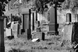 Karniowski cmentarz żydowski (2014)