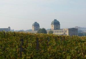 Wzgórza winne. Zielona Góra, 2005