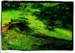 Ogrodowe bonsai / Garden bonsai