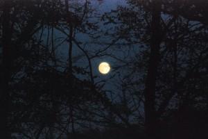 Moon in aweb / Księżyc wsieci