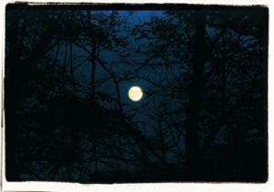 Moon in aweb / polaroid version/