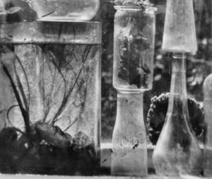 Okno / Window (1963); fragment zdjęcia J. Svobody