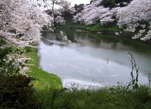 Widok (Tokio; okolice pałacu cesarskiego, 2007)