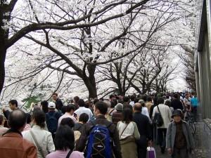 Sakura, sakura... (Tokio, 2007)
