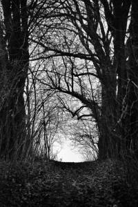 Droga tam... Dawny cmentarz żydowski wRaciborzu (2015)