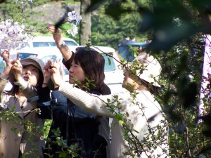 Catching the moment (seria: Hanami, 2007)