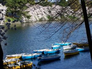 Sacura and boats (2)