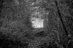 Zanikanie (dawny cmentarz ewangelicki wRaciborzu)