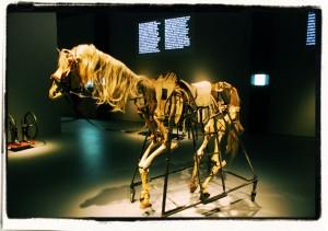 Koń - szkielet (zTeatru Śmierci, 1985). Fragment ekspozycji (2015)