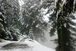 Zimowa ścieżka [Zamek Hradec nadMorawicą, luty 2015]