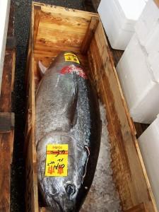 Sprzedany (tuńczyk; zwraca uwagę odcięty ogon pozwalający nasprawdzenie jakości mięsa ryby)