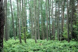 Lasy (bo domów już niema) (okolice Tylicza)