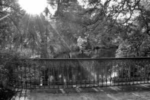 bez tytułu  (Charlottenburgpark, Berlin)