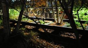 High Line porosły drzewa...