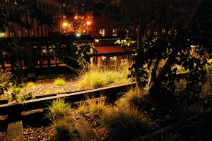 Zieleń High Line