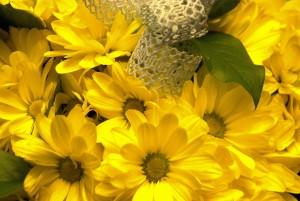 Kwiaty zPławniowic