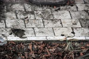 Podłoga / Remains of the floor (dom przedpogrzebowy, cmentarz; Pyskowice)