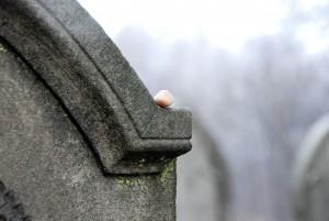 bez tytułu / without title (cmentarz żydowski wPyskowicach)