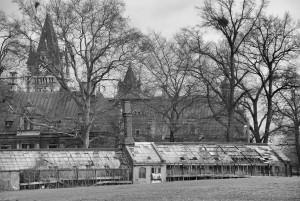 Zapomniany ogród (Pławniowice)