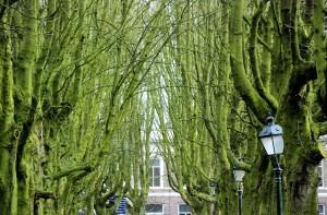 Drzewa/Trees (s-Hertogenbosch, marzec/March 2016)