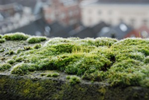 Mech / Moss (stone parts of the cathedral's roof, s-Hertogenbosch)