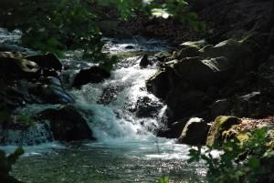 Cykl: The Fish is gone (1) Potok / Creek (Rytro, 2016)