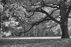Herbst /Jesień (Neudeck/Świerklaniec)