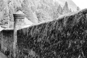 Wall / Mur (Taime)
