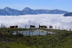 Pastwisko w chmurach (G. Sabaudia; okolice Col de Sur le Freu)