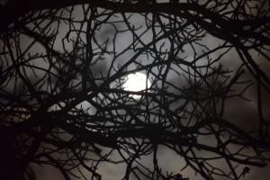 Księżyc 14 listopada 2016. Oddalenie