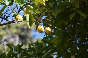 Paradies'gardens / Rajskie ogrody (Jeruzalem)